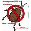 Професионална обработка срещу хлебарки. Пръскане за хлебарки